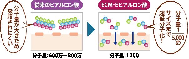 従来のヒアルロン酸の分子量は600万|~800万に対して、ECM・Eヒアルロン酸は5000分の1サイズの1200