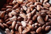 最上級のカカオ豆