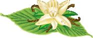 天然ブルボンバニラ